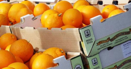 Bild für Über Orangen, Vitamin C und ein herrliches Orangen-Mandel-Kuchen Rezept