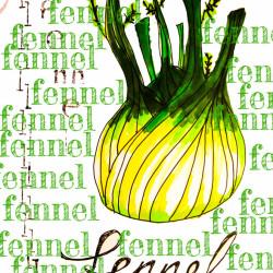 Bild für Über den Fenchel und ein leckeres Fenchel-Risotto