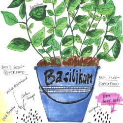 Bild für Basilikum Samen – der neue Basilikum Boom