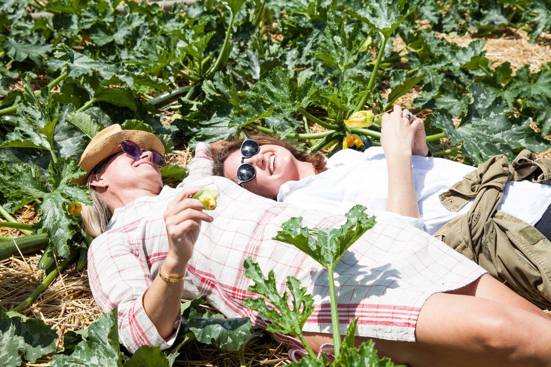 Besuch im Seewinkel: Alles über die Zucchiniblüte